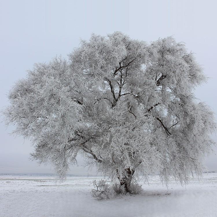 Winter in Quitaque