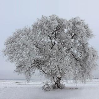 qp-ice-chrystals-tree-jj-1503