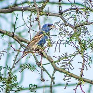 Springtime Bird 1 2017